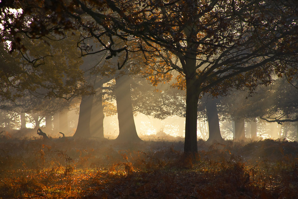 Autumn-Richmond-Park.jpg